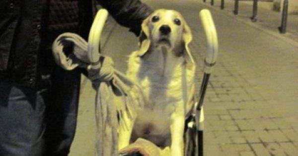 Θεσσαλονίκη: Έβγαλε βόλτα τον παράλυτο σκύλο του με καροτσάκι για μωρά