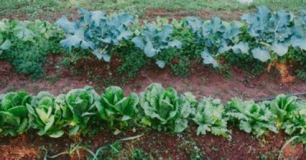 Φεβρουάριος, εργασίες στον κήπο