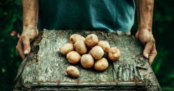 Τα οφέλη της πατάτας