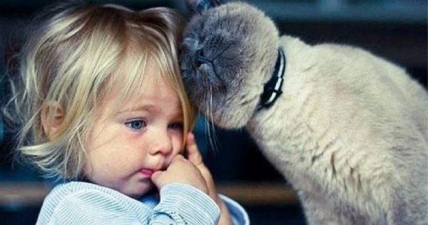 Η θεραπεία της γάτας: Τα 5 πανίσχυρα οφέλη που απολαμβάνουν όσοι ζουν με μια γάτα