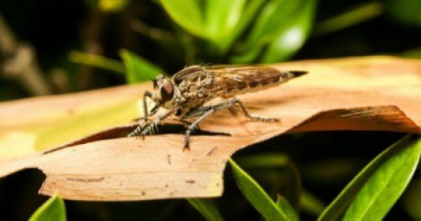 Σας τσίμπησε κουνούπι; Εξαφανίστε τη φαγούρα και την κοκκινίλα στο λεπτό!