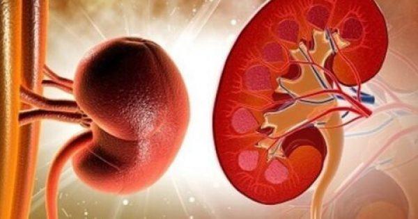 Πώς να καθαρίσετε τα νεφρά σας με φυσικό τρόπο