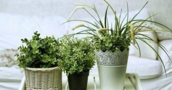 6 τέλεια φυτά για το δωμάτιό σας