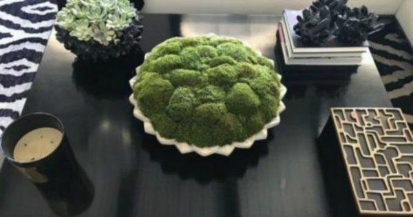 Βάλτε στο Σπίτι σας το Φυτό που δεν Μαραίνεται Ποτέ!