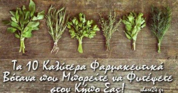 Τα Top 10 Φαρμακευτικά Βότανα που μπορείτε να Καλλιεργήσετε Μόνοι Σας!
