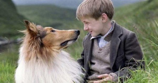Θυμάστε τη Λάσι; Δεν θα πιστεύετε τι απέγινε το σκυλί της γνωστής σειράς