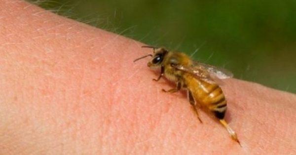 Σας τσίμπησε μέλισσα; Δείτε τι πρέπει να κάνετε