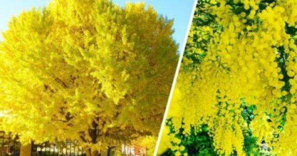 17 Υπέροχα Δέντρα του Κόσμου, Μοναδικής Ομορφιάς!