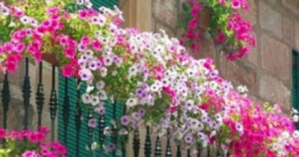 Φτιάξτε μια παραδεισένια λουλουδάτη βεράντα!