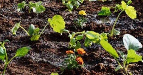 Πώς φτιάχνουμε έναν μικρό λαχανόκηπο (ΒΙΝΤΕΟ)
