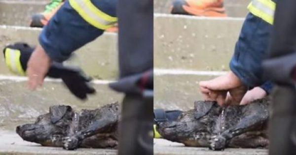 Καβάλα: Πυροσβέστης έσωσε σκύλο που παραλίγο να καεί ζωντανός σε φωτιά