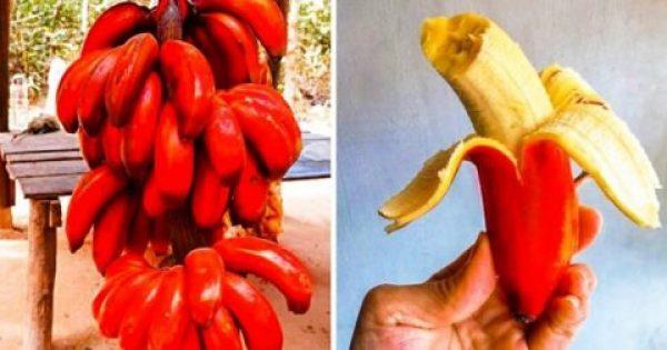 Η Κόκκινη Μπανάνα και άλλα 18 Σπάνια Εξωτικά Φρούτα, που δεν Γνωρίζατε ότι Υπάρχουν