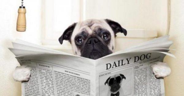 Πράγματι μοιάζουμε με τους σκύλους μας αλλά όχι όπως νομίζετε!