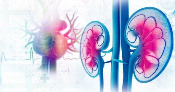 Καρκίνος νεφρού: Συμπτώματα και σημάδια που επιβάλλεται να ξέρουμε όλοι