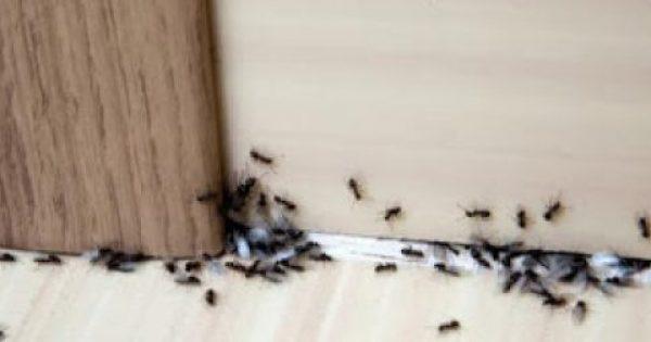 Τι να βάλετε στις εισόδους του σπιτιού για να απωθήσετε τα μυρμήγκια