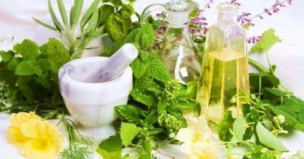 Τα ελληνικά βότανα και η θεραπευτική δράση τους