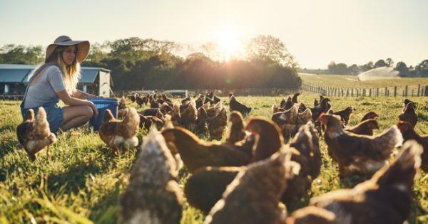 Η διαβίωση κοντά σε ζώα κτηνοτροφίας μειώνει τον κίνδυνο αλλεργίας, αλλά και ψυχικών διαταραχών
