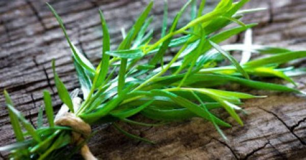 Εστραγκόν. Το βότανο με την ιδιαίτερη γεύση και το ξεχωριστό άρωμα