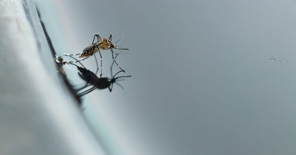 Τα βασικά μέτρα προστασίας από τα κουνούπια