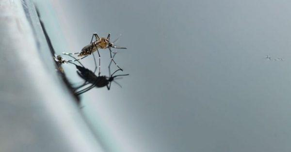 Τα βασικά μέτρα προστασίας από τα κουνούπια!!!