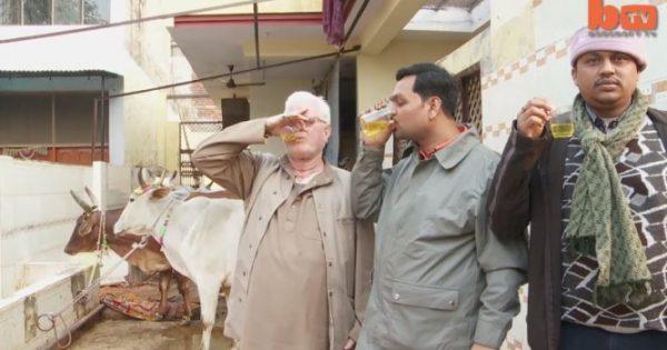 Αναγούλα: Πίνουν ούρα αγελάδας «για να γιατρέψουν» πάσα νόσο! [vid]