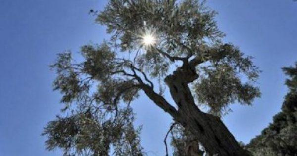 Το ιατρικό «μεσογειακό παράδοξο»: «Λουζόμαστε» στον ήλιο αλλά μας λείπει βιταμίνη D!