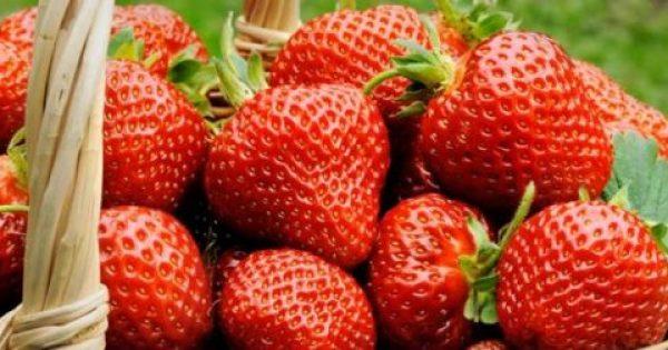 Τα σπουδαία οφέλη και οι κίνδυνοι της φράουλας για την υγεία