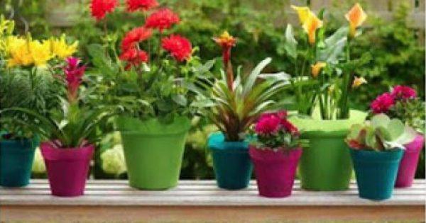 Πως να διώξετε οικολογικά τη μελίγκρα, τα μαμούνια και τα σαλιγκάρια από τα φυτά σας