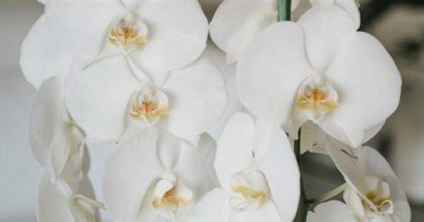 6 μυστικά για φροντίδα ορχιδέας (BINTEO)