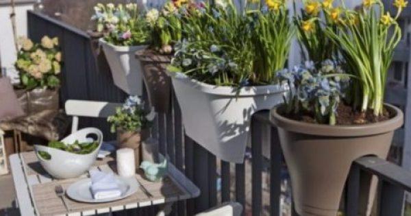 9+1 Φυτά που αντέχουν τη ζέστη για το Καλοκαιρινό Μπαλκόνι σου