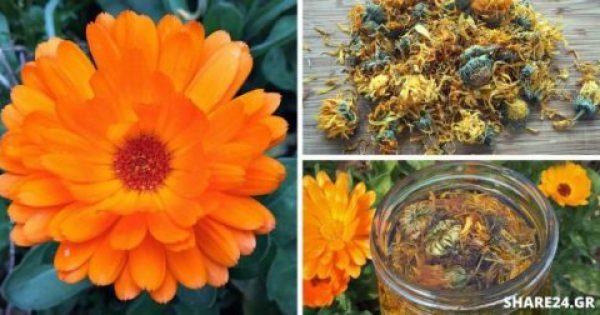 Καλεντούλα – Πώς να Χρησιμοποιήσετε & να Μεγαλώσετε στον Κήπο Σας Αυτό το Θεραπευτικό Φυτό!