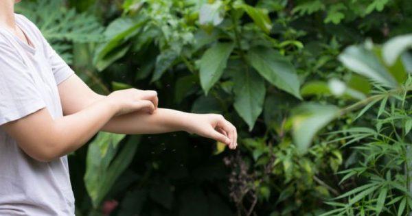 Τσίμπημα από κουνούπι: Τα συμπτώματα που δείχνουν σοβαρή αλλεργική αντίδραση!!!