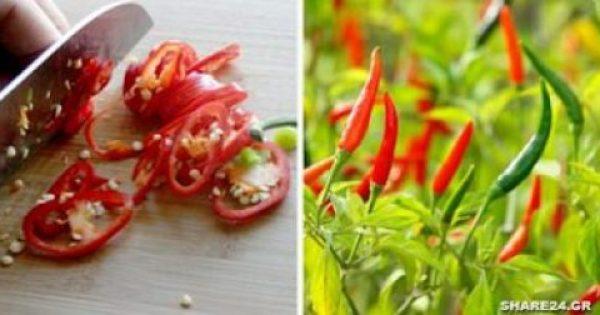 Τρώγοντας Αυτές τις Πιπεριές Αυξάνετε το Προσδόκιμο Ζωής σας κατά 13% λένε οι Επιστήμονες!