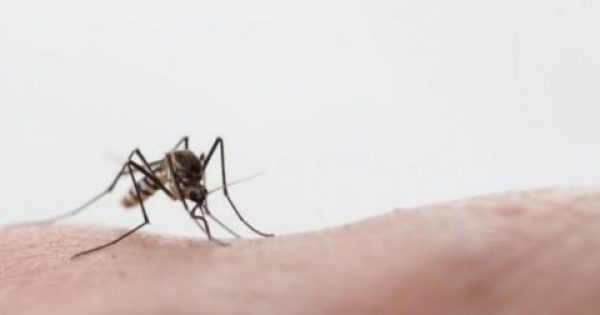 Ο τρόμος είναι εδώ: Σε επτά ανέρχονται τα κρούσματα του ιού του Δυτικού Νείλου
