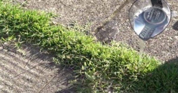 12 πανέξυπνες χρήσεις του ξυδιού στον κήπο ή την αυλή σας που δεν είχατε ποτέ φανταστεί
