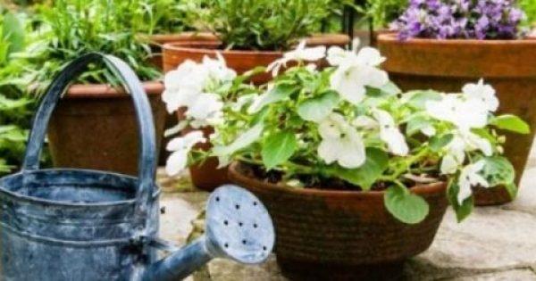 Δοκιμάστε το και δείτε τα φυτά σας να μεγαλώνουν στο άψε- σβήσε!!! ΚΑΤΑΠΛΗΚΤΙΚΟ ΚΟΛΠΟ!