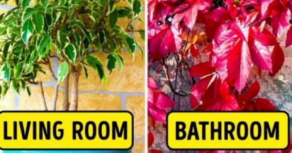Τα 15 καλύτερα φυτά για κάθε δωμάτιο του σπιτιού