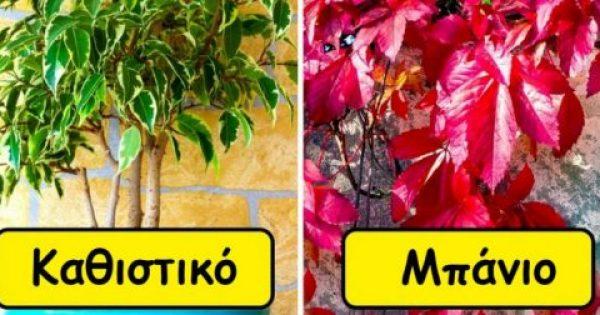 15 Θαυματουργά Φυτά που Καθαρίζουν τον Αέρα και Χαρίζουν Υπέροχο Άρωμα. Δείτε Ποιο Είναι Ιδανικό για Κάθε Χώρο.