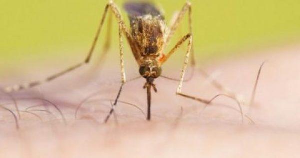 Τι να τρώτε για να μην σας τσιμπούν τα κουνούπια