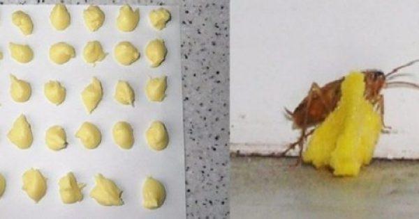 Φτιάχνει μικρές μπάλες από δύο υλικά και εξαφανίζει τις κατσαρίδες