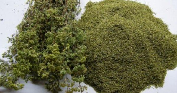 Η ισχυρότερη πανάκεια της φύσης… φυτρώνει στη χώρα μας