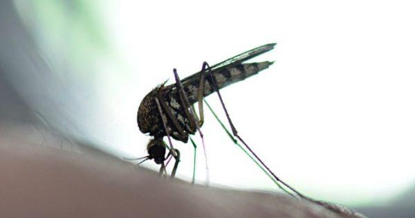 Ιός του Δυτικού Νείλου: Προσοχή στην μόλυνση από τα κουνούπια – Τι λέει το ΚΕΕΛΠΝΟ