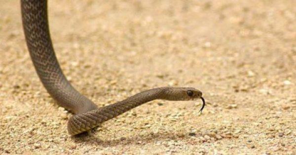 Τι να κάνετε αν σας δαγκώσει φίδι ή σκορπιός – Οι συμβουλές από το ΕΚΑΒ