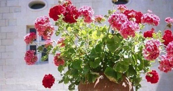 Τι φυτά να βάλω μέσα στο σπίτι