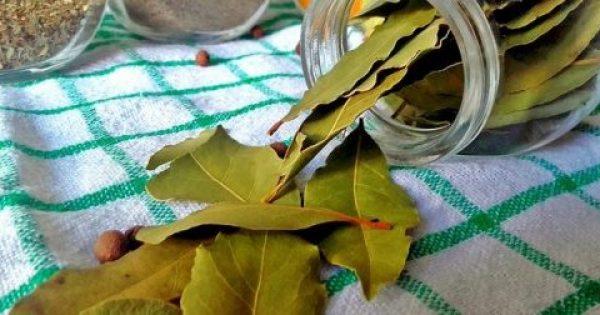 Τα Φύλλα Δάφνης Κάνουν Θαύματα. Τέλος οι Πονοκέφαλοι και οι Πόνοι στις Αρθρώσεις, με Αυτές τις 2 Συνταγές.
