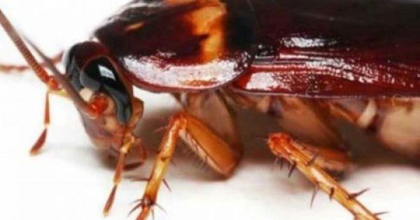 Αυτή είναι η μυρωδιά που δεν αντέχουν με τίποτα οι κατσαρίδες και τα μυρμήγκια