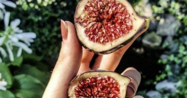 Σύκο κανείς; Χάσε κιλά τρώγοντας το φρούτο του Αυγούστου