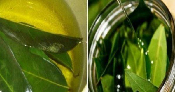 Μάθετε πως να Χρησιμοποιήσετε Φύλλα Δάφνης για την Κούραση, το Άγχος, τα Αναπνευστικά προβλήματα και την Καταπολέμηση ζιζανίων