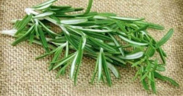 Αυτό είναι το βότανο που ενισχύει τη μνήμη έως και 75%! – Πολλά τα οφέλη του στην υγεία