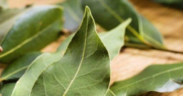 Φύλλα Δάφνης: Οι ευεργετικές ιδιότητες που έχουν